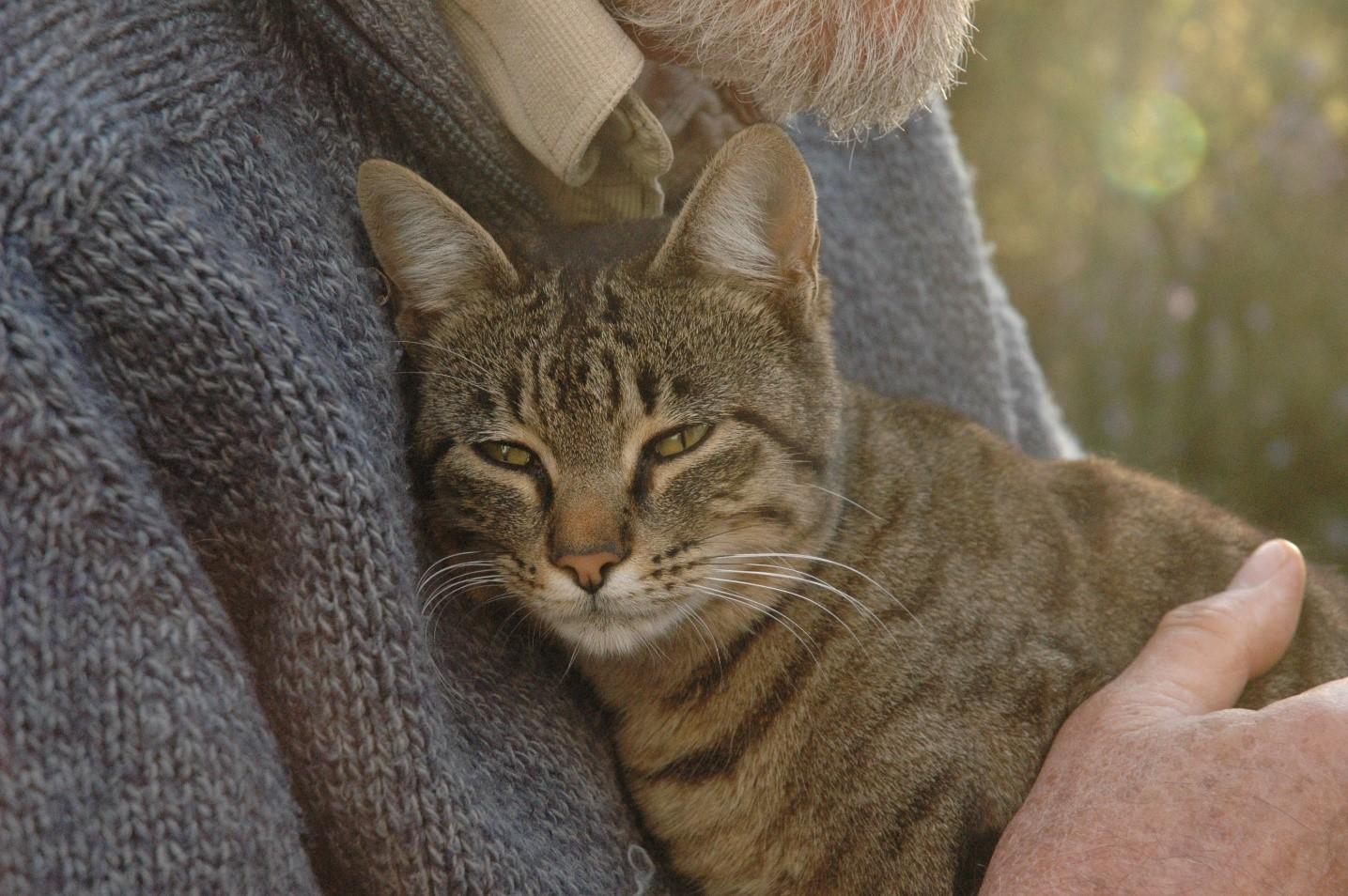 Harald_katt